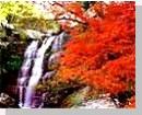 ルーイのホテル&ゲストハウス - Dansaiリゾーツ(プーKradueng、フールアン、スアンパンガンホアヒンガム国立公園)